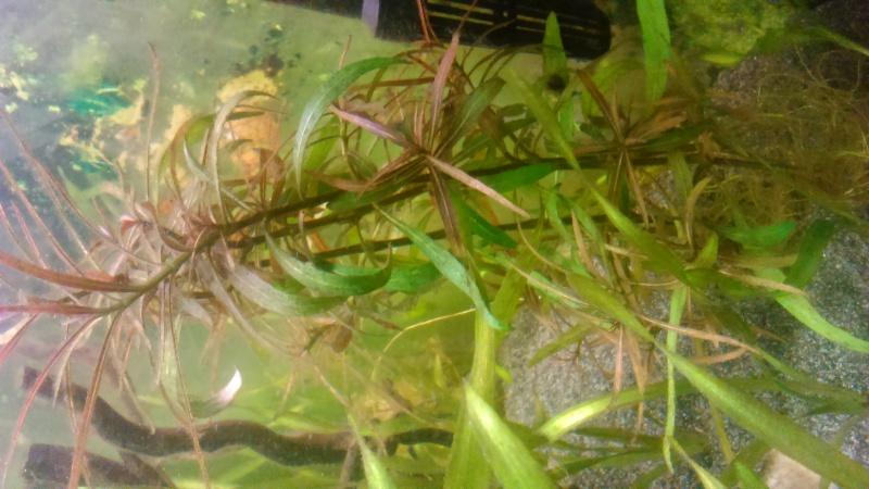identification d'une plante Dsc_0014