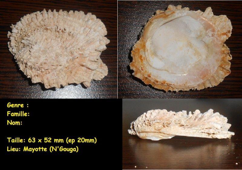 demande d'identification de nouvelles coquilles trouvées à Mayotte,  Aa_x10