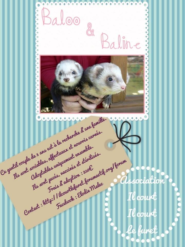 Baloo et Baline, gentil couple à l'adoption 10958010