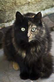 Wolf's ThunderClan Kitties Hollow10