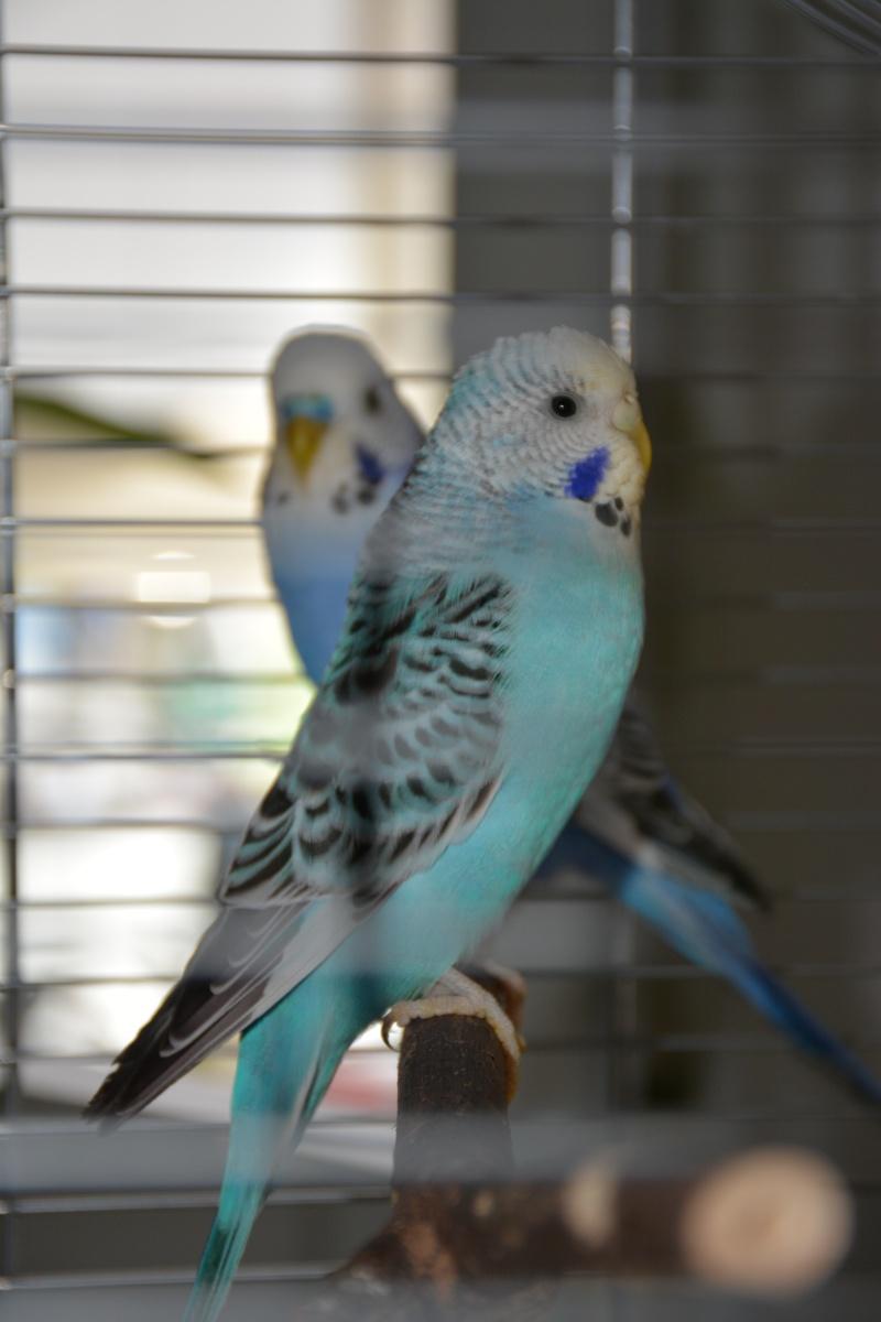 Roméo et juliette Dsc_0217