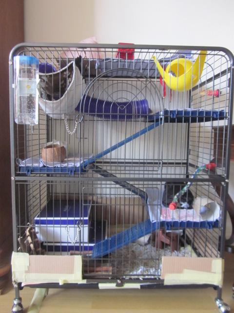 Photos de vos cages - Page 3 Rates_18