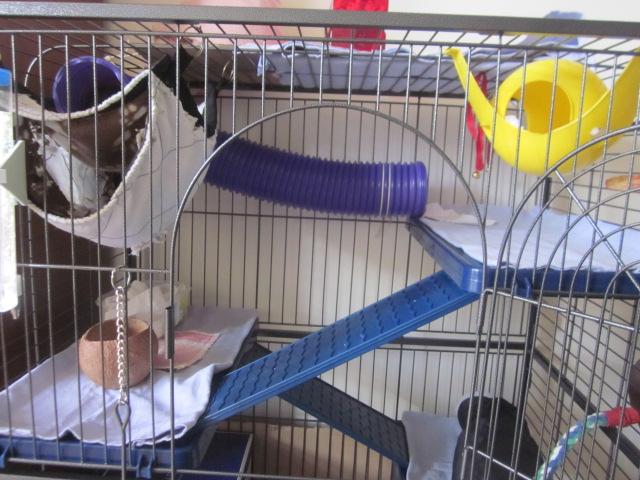 Photos de vos cages - Page 3 Rates_20