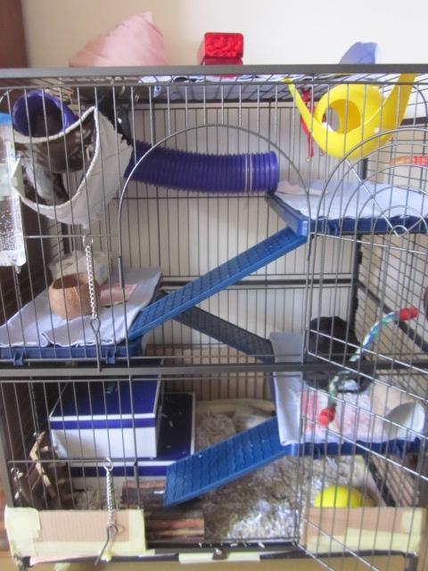Photos de vos cages - Page 3 Rates_23