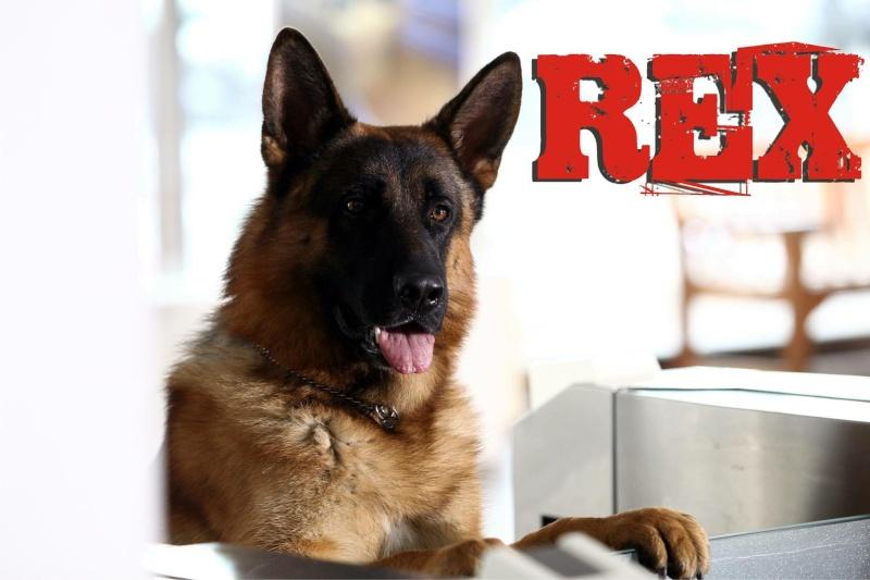 Rex chien flic la série Allemande Italienne