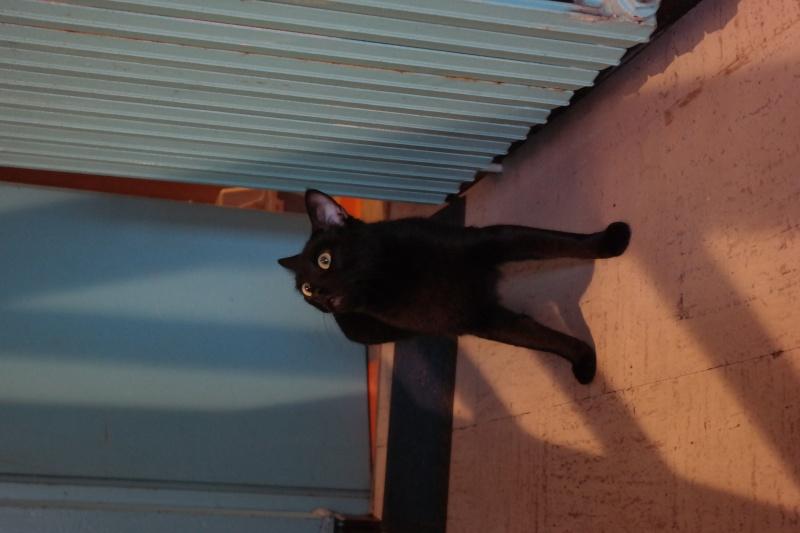 HOOK, mâle de type européen noir, né le 01/11/2012 Sam_0411