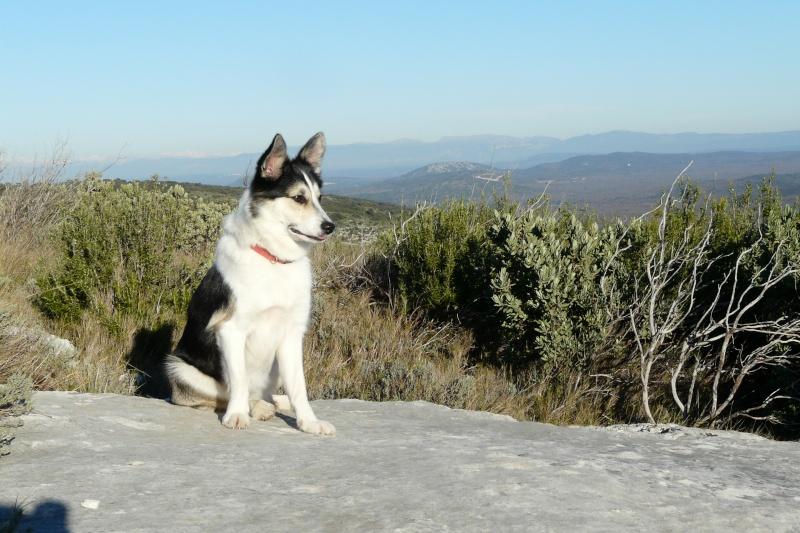 Promenade avec chiens Au pied de St Victoire (Aix en Provence) - Page 2 P1060612