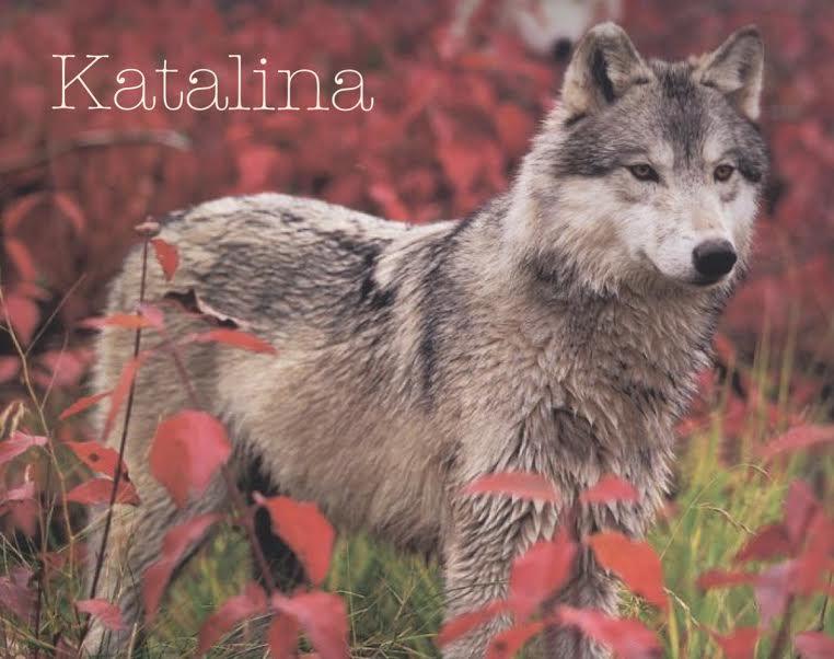 Break through the surface~Katalina Katali10