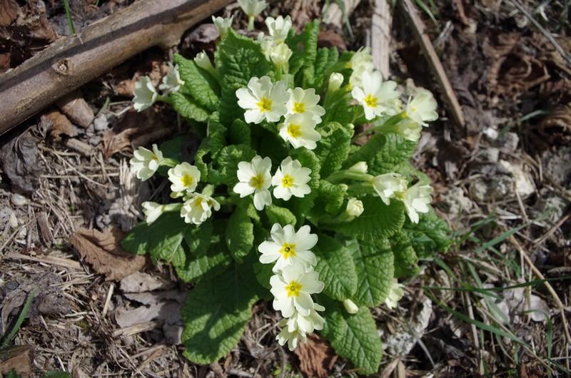 Le printemps arrive aux portes de la Savoie 517