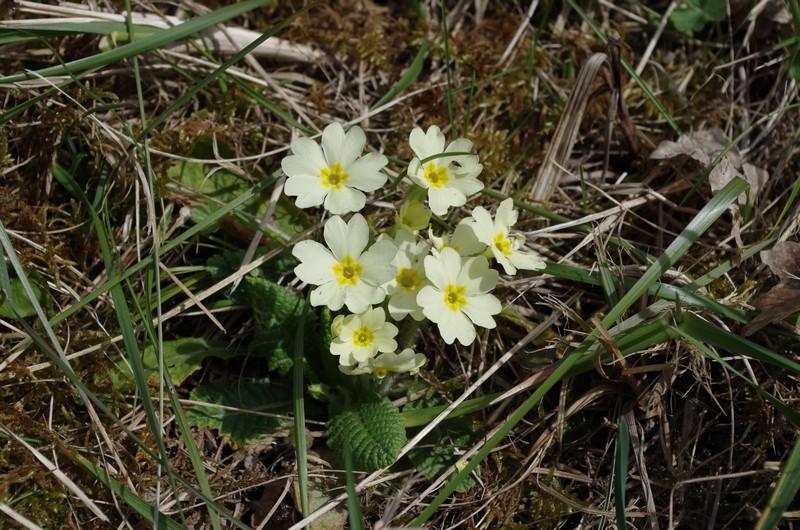 Le printemps arrive aux portes de la Savoie 616