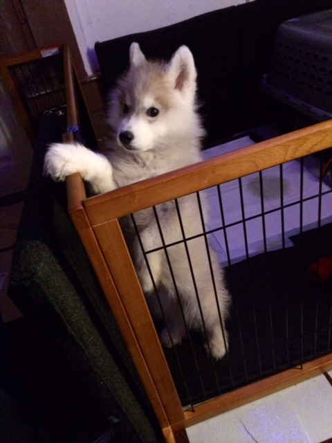 Mylo's first escape!  Photo-12
