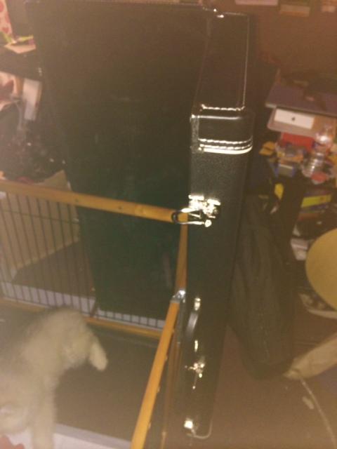 Mylo's first escape!  Photo_10