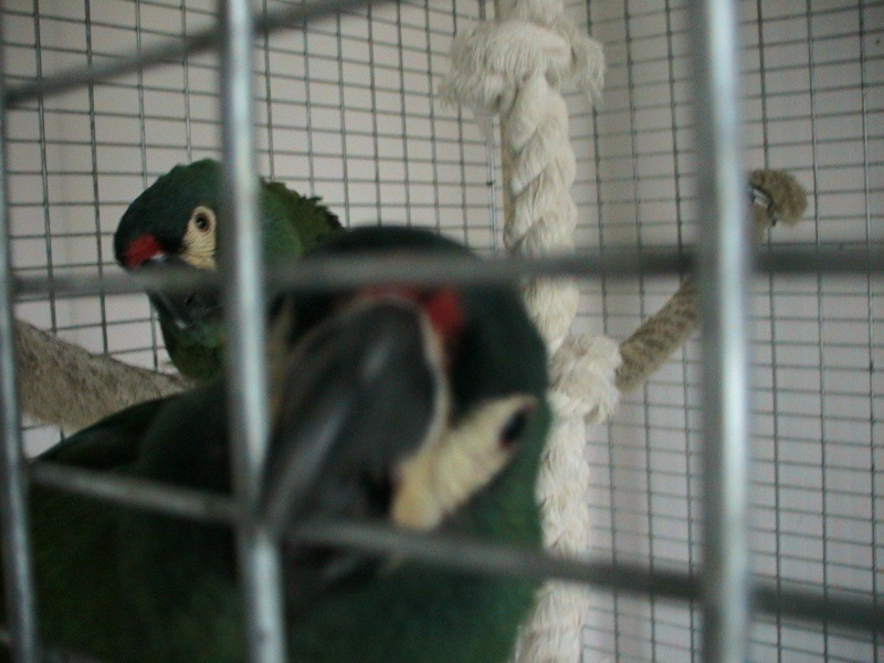 Mes oiseaux Img_0610