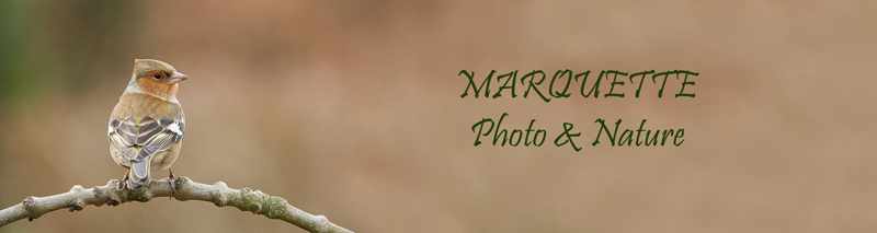 Marquette photo nature Bannie11