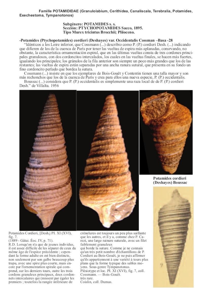 similaire a Potamides mixtus 3potam10