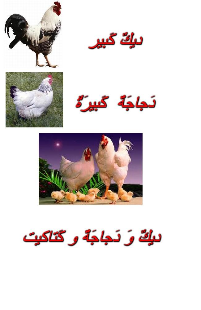 Cours de Arabia Dik10