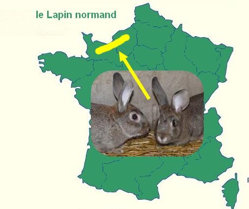 le lapin Normand  Origin10