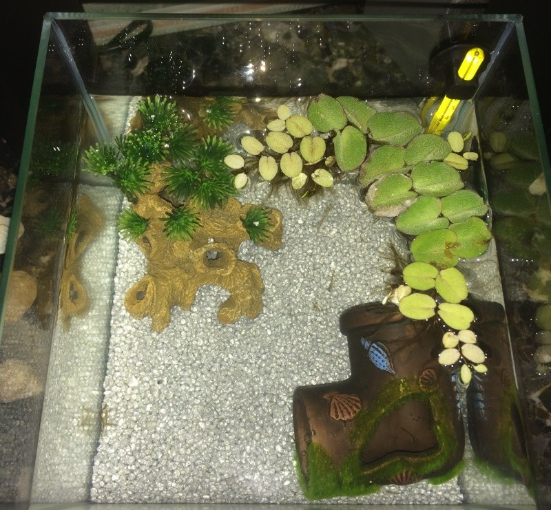 un aquarium trop chargé ? Img_3013