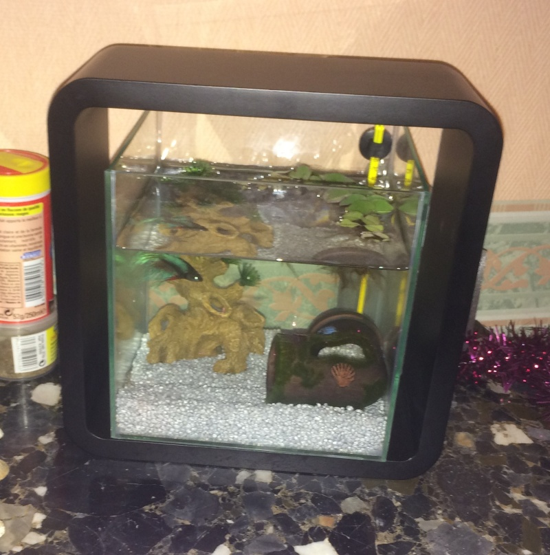 un aquarium trop chargé ? Img_3015