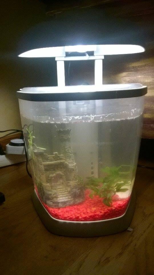 taille de l'aquarium? 10934610