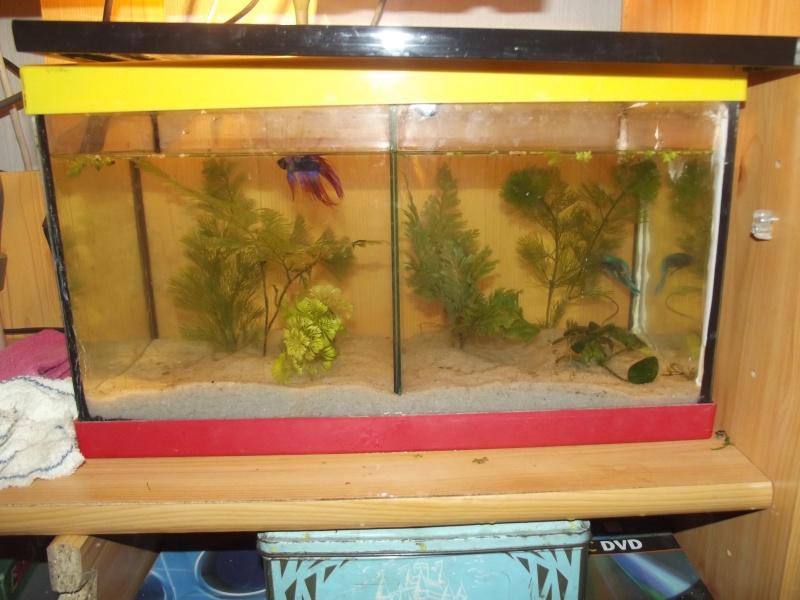taille de l'aquarium? Dscf0122