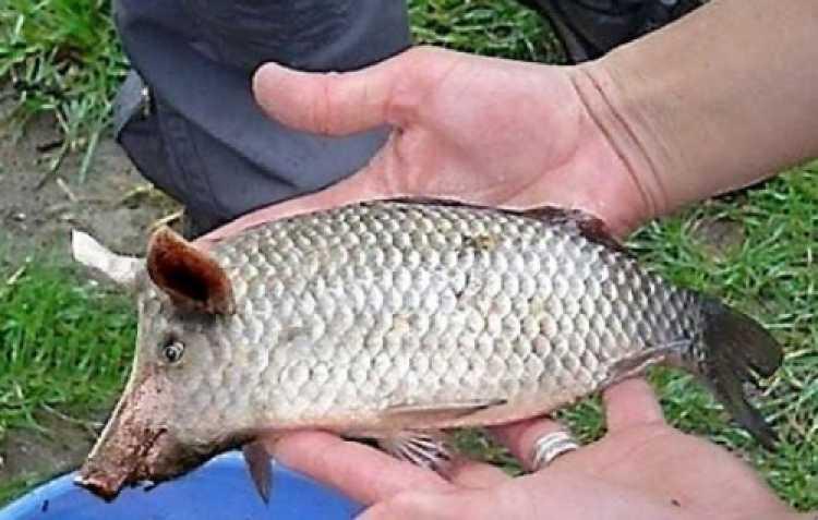 drole de poisson  5d905010