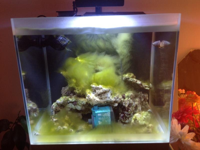 petit bac nano 54l reef 40 de Ludo Image10