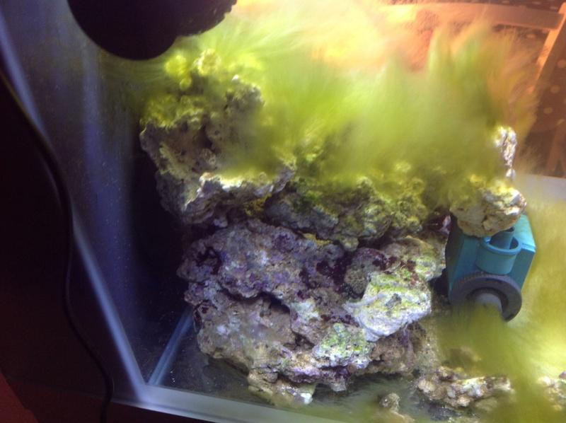 petit bac nano 54l reef 40 de Ludo Image12