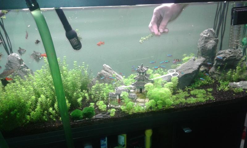 aquarium de 240 litres de Tony 1er12