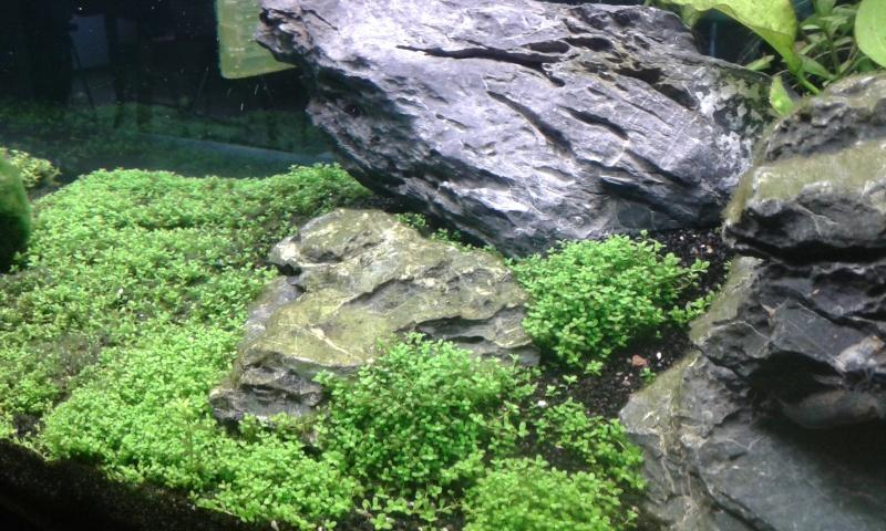 aquarium de 240 litres de Tony 20150128