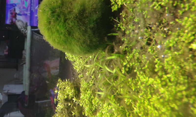 aquarium de 240 litres de Tony 20150137