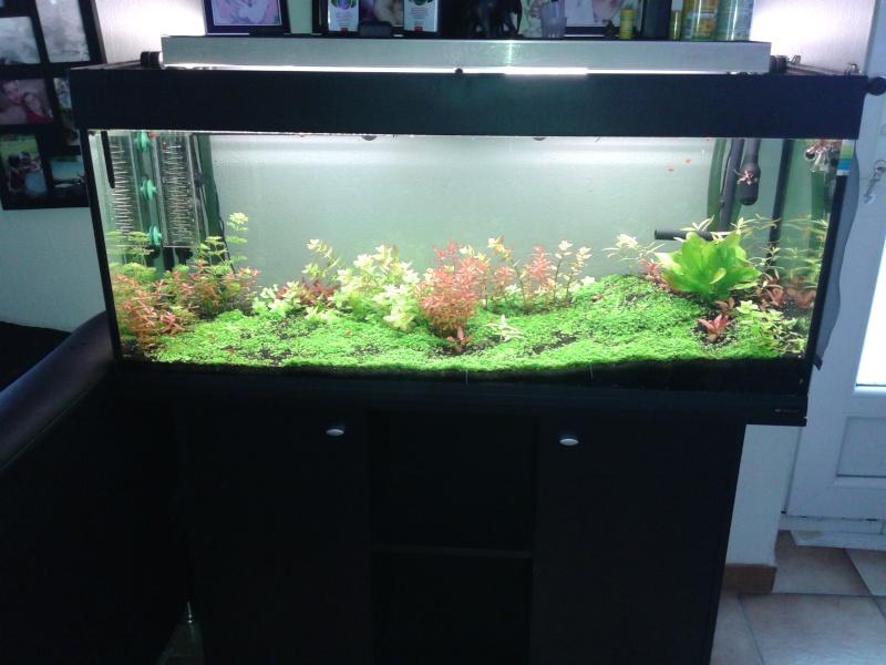 aquarium de 240 litres de Tony 20150311