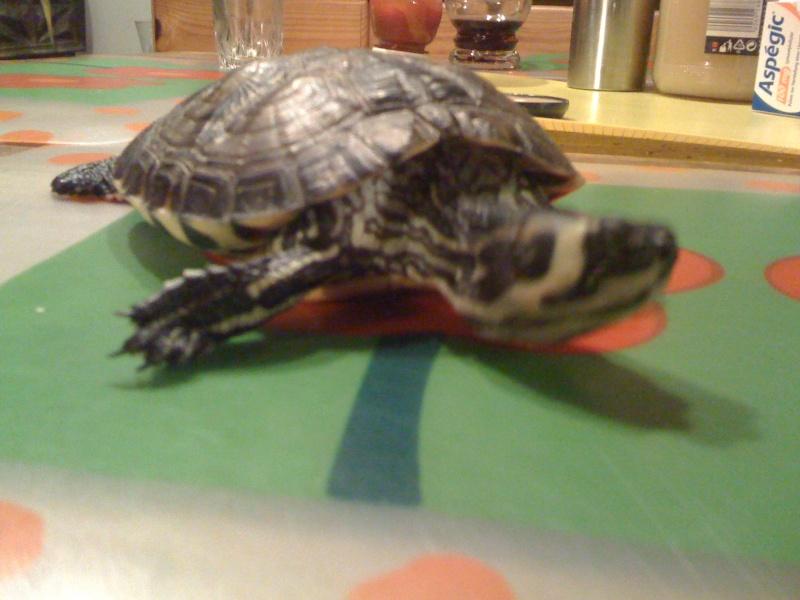 besoin d'un conseil ma tortue d'eau ne réagit plus  Img_1312