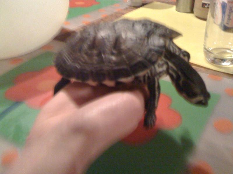 besoin d'un conseil ma tortue d'eau ne réagit plus  Img_1313
