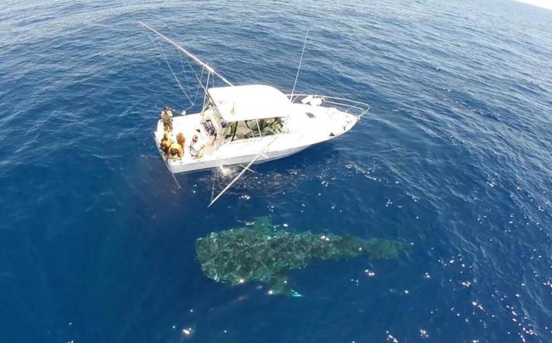 Tubarão baleia 19082810