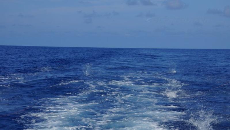 Corrico Oceânico Com Lulas Artificiais 5_lure12