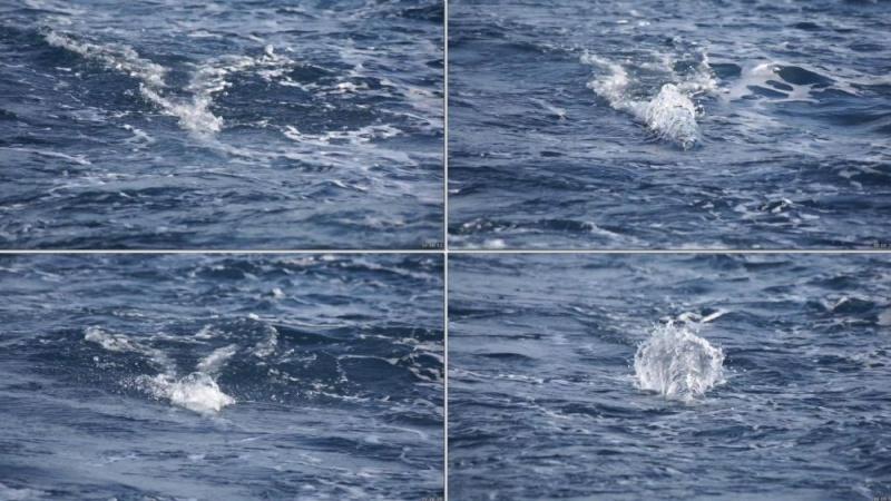 Corrico Oceânico Com Lulas Artificiais Trolli11