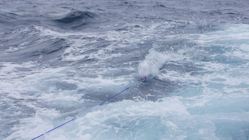 Corrico Oceânico Com Lulas Artificiais Trolli13
