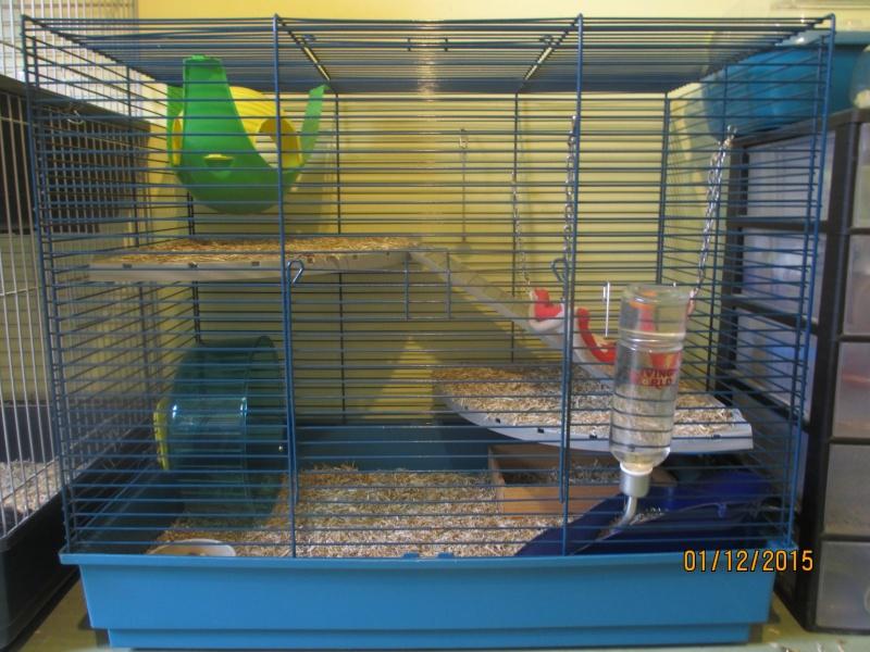 La cage de Joe et Dexter  Img_5910