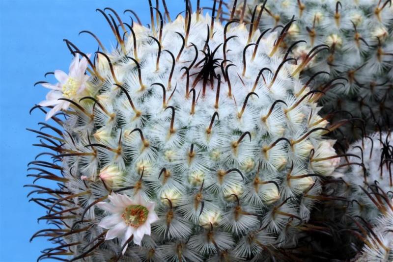 Flowers of January 2015 002mam10