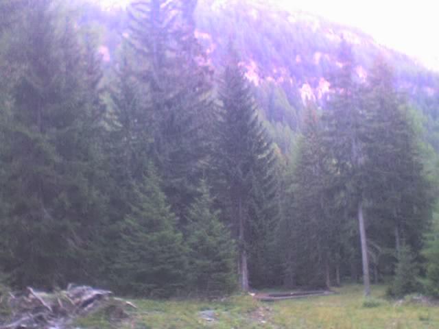 foto dal bosco, i nostri mezzi all'opera - Pagina 3 29911