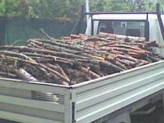 foto dal bosco, i nostri mezzi all'opera - Pagina 3 37010