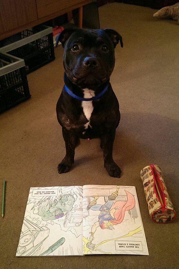 Django and his colouring book! 10906111