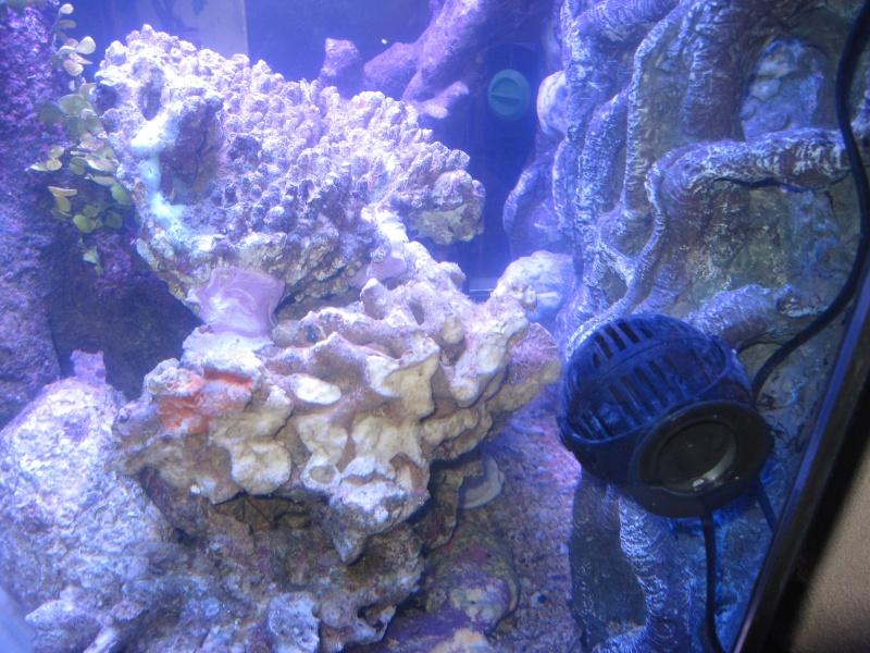 Concernant la taille de l'aquarium et  notre méthode Img_1813