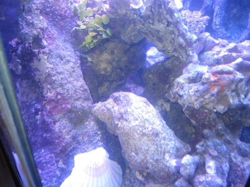 Concernant la taille de l'aquarium et  notre méthode Img_1814
