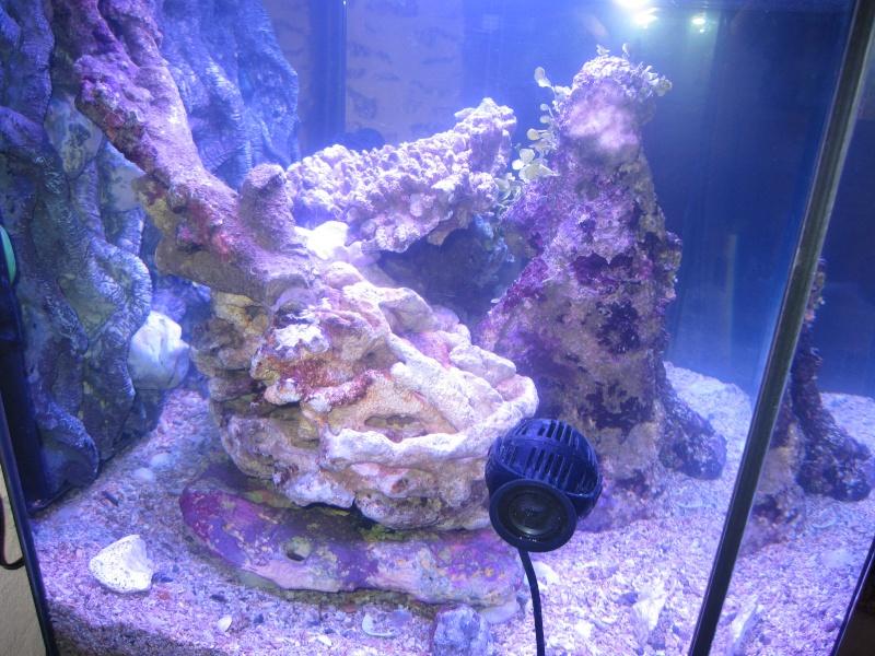 Concernant la taille de l'aquarium et  notre méthode Img_1815