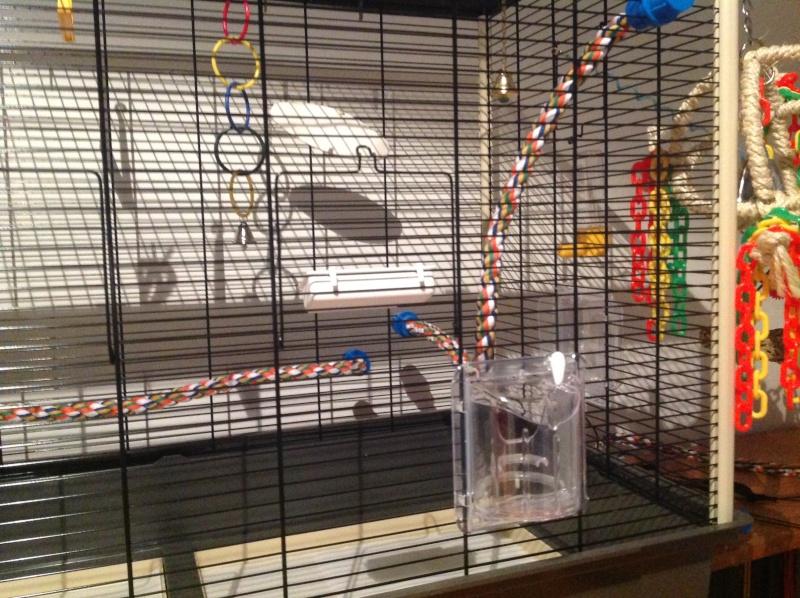 "La ""cage à Karl"" Img_1113"