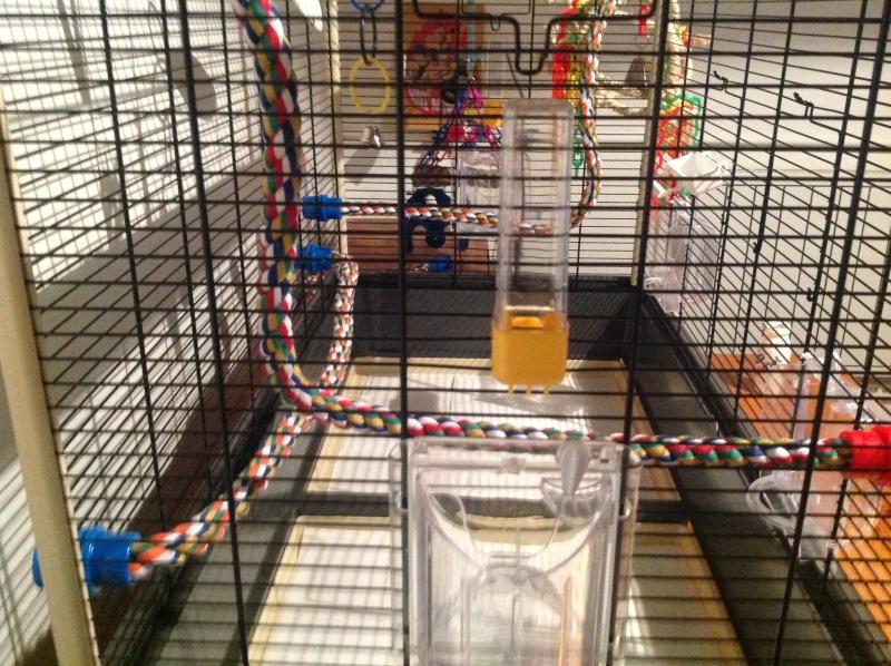 "La ""cage à Karl"" Img_1114"