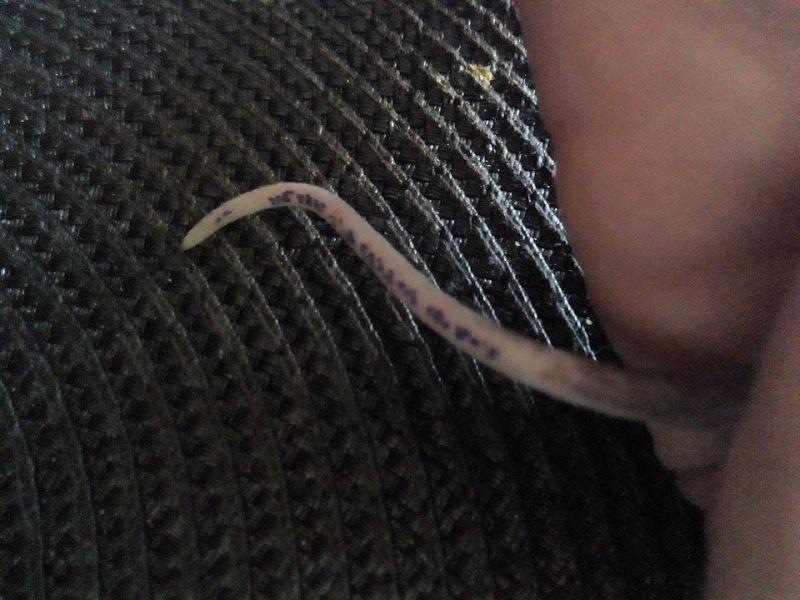 Nouveau raton - Age, blessures? 10965810