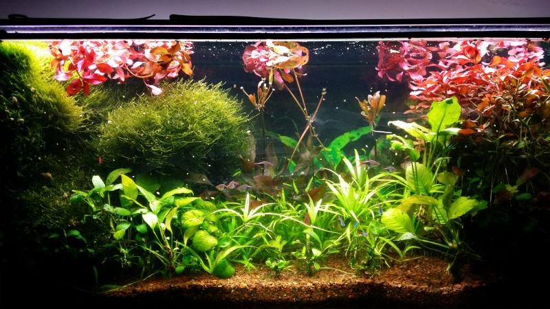 2 aquariums 240L : Spécifique Cacatuoides et Communautaire 20150133